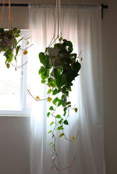 indoor water plants, ice cubes, hanging plants indoor, plant stands, indoor hanging plants, hous plant, blog, indoor plant ideas, hanging indoor plants