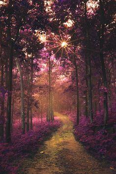 ✯ The Road to Wonderland