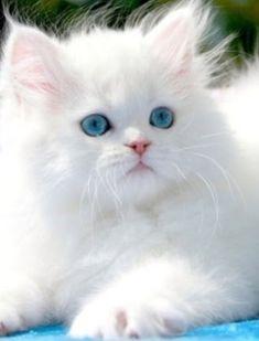 Cute ♥♥  Beautiful eyes.