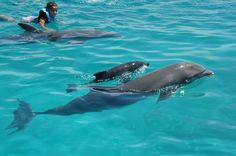 Swim with wild dolphins =D