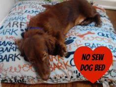 The Food Hussy!: Let's Get Pinteresty with a No-Sew Dog Bed