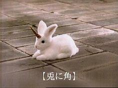 the rare unicorn rabbit.