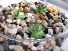How to Grow an Indoor Succulent Garden