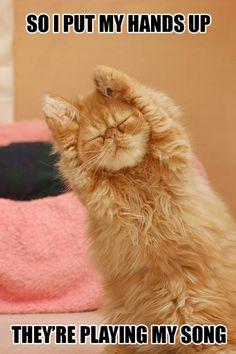 Dancing cat. Haha.