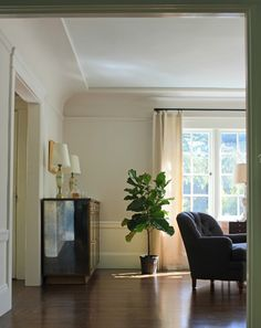 fiddle leaf fig tree care sunny growing tips