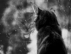 {rainy day cat} reflection