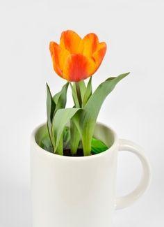 Use coffee as a plant fertilizer