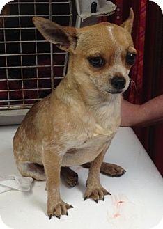 Pet Adoption Providence Rhode Island