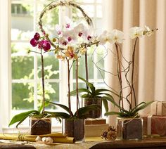 LIVE PHALAENOPSIS ORCHID IN GLASS VASE