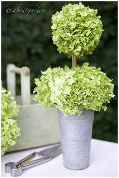 Hydrangea topiary decor, craft, countri garden, colors, hydrangea cottag, flowers, topiaries, hydrangea topiari, hydrangeas