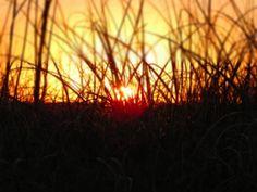 Florida writer 2014 -- dune grass towards the sunset.
