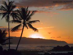 back to Hawaii!