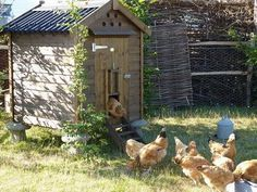 Adorable chicken coops