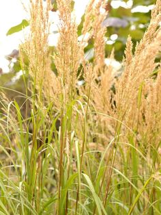 How to Landscape With Ornamental Grasses - on HGTV