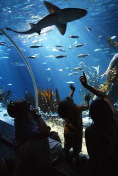 Sea Life Arizona Aquarium,  Arizona Mills Mall ~ Tempe, AZ