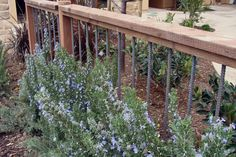 Rebar fence by cultivate landscape designw