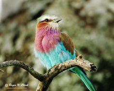 pretty bird! pretti bird