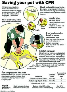 How to save your pet's life ~ very important to know