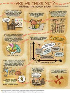 Hunting for the Brain's Hidden Treasures: Scientific American