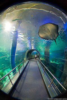 Melbourne Aquarium...cool