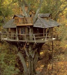 cool-tree-houses favorit place, idea, architectur, dream, tree houses, treehous, trees, space, live