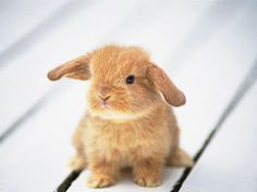 #Cute baby #animal picture