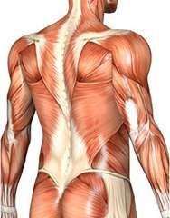 spierpijn in de kuiten, bovenbeen, nek en rug: spieren