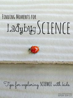 Finding Moments for Ladybug Science. Tips for exploring Science with kids at home #smartmarch
