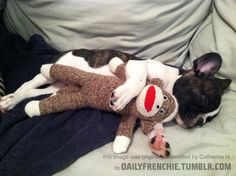 adorable pup Scout sleeping with her beloved sock monkey