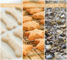 Pamper Your Pet: 9 Recipes For Homemade Treats