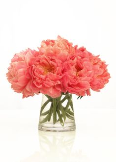 I will have coral peonies in my bouquet :)