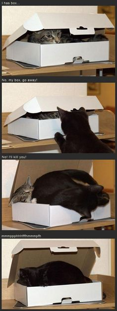 I can fits too! #cat #humor #cats #funny #quotes #meme #lolcats #cute =^..^= www.zazzle.com/kittyprettygifts