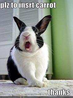animals, foods, easter, funny bunnies, rabbits, funni, hay, carrots, young adults