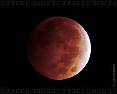 """Our Little Acre: """"Wordless Wednesday: Lunar Eclipse - 8 October 2014"""""""