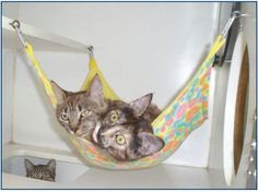 awesome DIY tutorial on making kitty hammock. MUST do this for spooky!