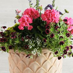 Easy DIY Container Gardens | Annual Container | SouthernLiving.com diy potted plants, pot flower, potted flowers, front doors, garden idea, garden recipes, southern live, plant containers, container gardening
