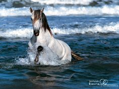 water, anim, seas, horses, the wave, the ocean, white, wallpapers, horse photos