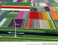 A Majestic Tulip Farm in Netherlands…