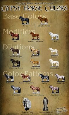 Gypsy Horse Colors