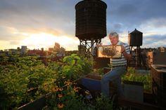 lepeupledesabeilles megac honey, rooftop beekeep, urban beekeep, courtesi eric, eric tourneret, york citi