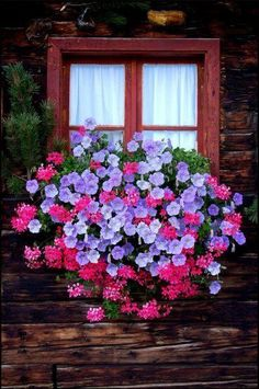 Petunias and Geraniums in a window box. Container gardening