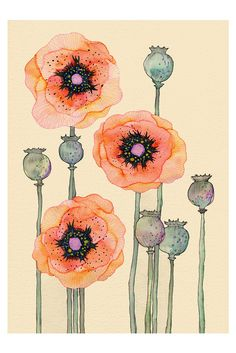 peach poppies by colleen parker