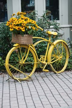 yellow flowers, vintage bikes, color, bicycl, yard art