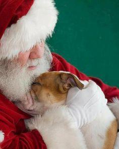 Santa Loves Pitties!