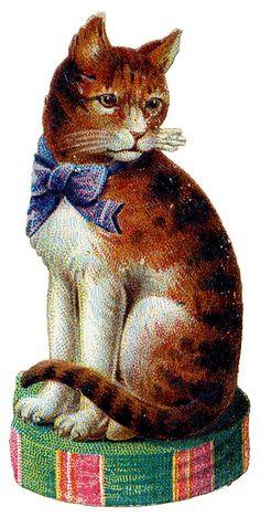 Victorian cat scrap