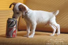 flash gordon villalobos rescue center pit bulls amp parolees pitbull