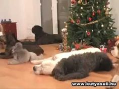 Dogs decorating a Christmas tree.mov