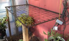 This is a shelf my husband put up in my Greenhouse. It is the box spring out of a crib....trying to recycle   :)