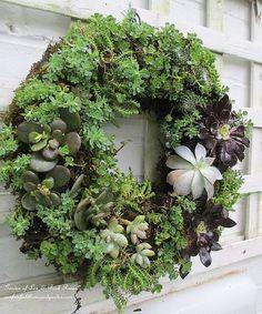 succul wreath, craft, succulent wreath diy, idea, succulent plants, diy succul, garden, wreaths, diy projects