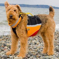Sailing, camping dog, canoeing dog